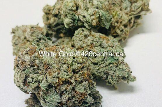 weed delivery marijuana dispensary london ontario